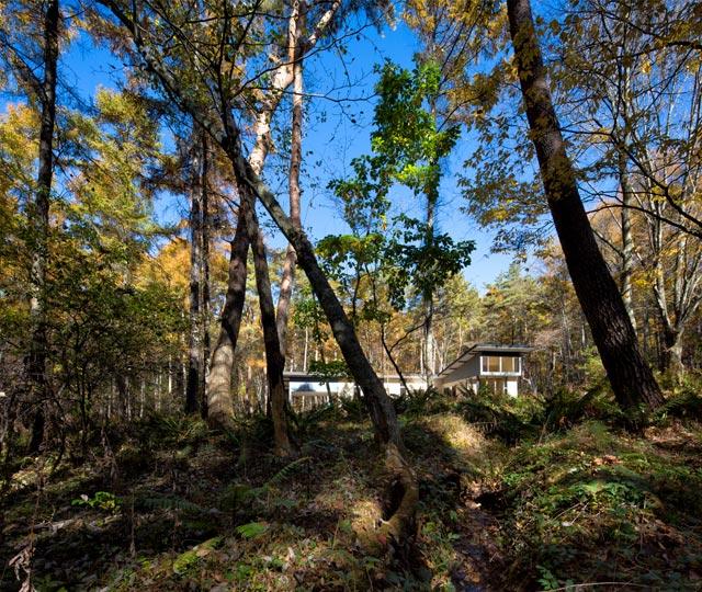 羊歯の森にある家