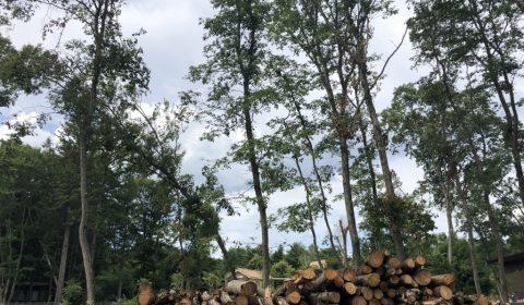 伐採完了 —薪棚で境界線の演出を—