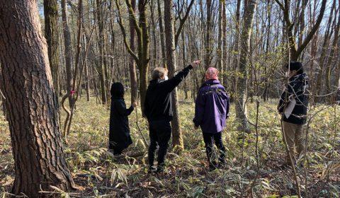 伐採樹検討 ー光と風の計画ー