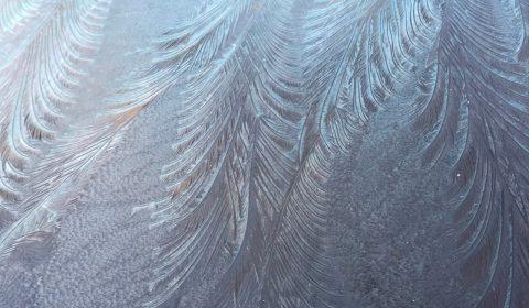 窓霜 ー自然のパターンー